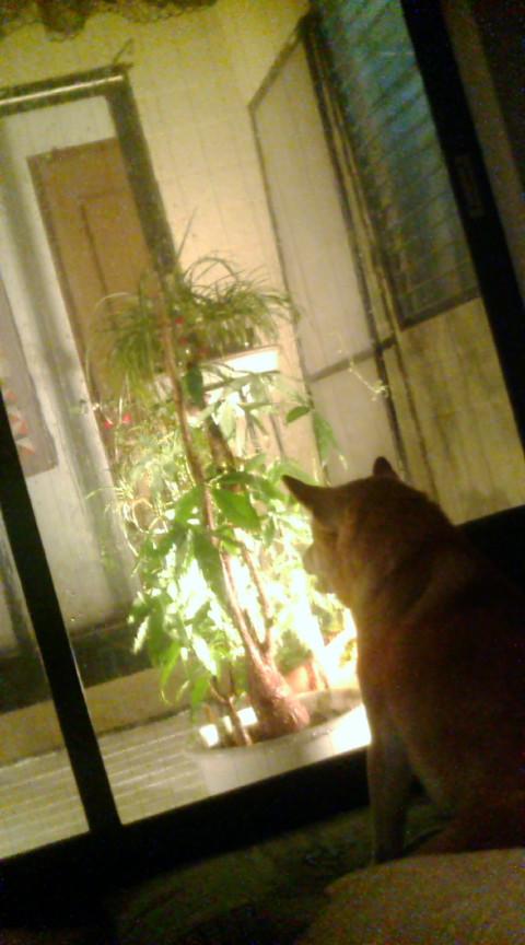 彼は雨を見てる